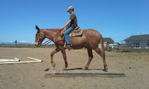 Reed – 10 yr old john mule, rides the best!