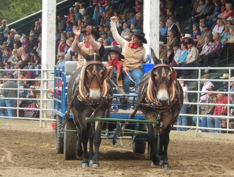 Fall is here! 2017!!!  Delivery is available on all our mules, nation wide.  Check out our schedualed trips!