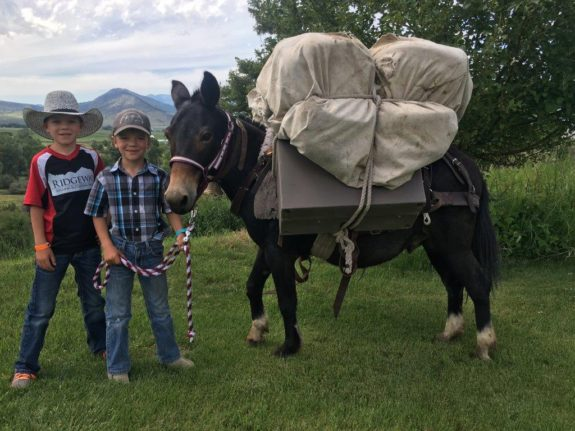 Lucky – small kids mule that rides better then most full size mules